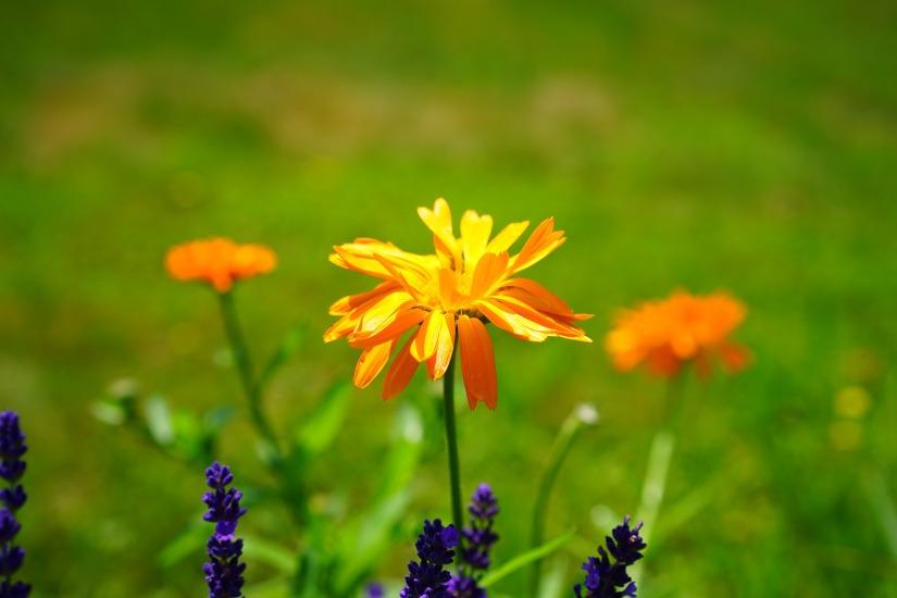 Trei remedii naturale pentru arsurileușoare