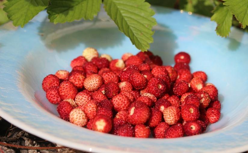 Cura cu suc din frunze și fructe defragi